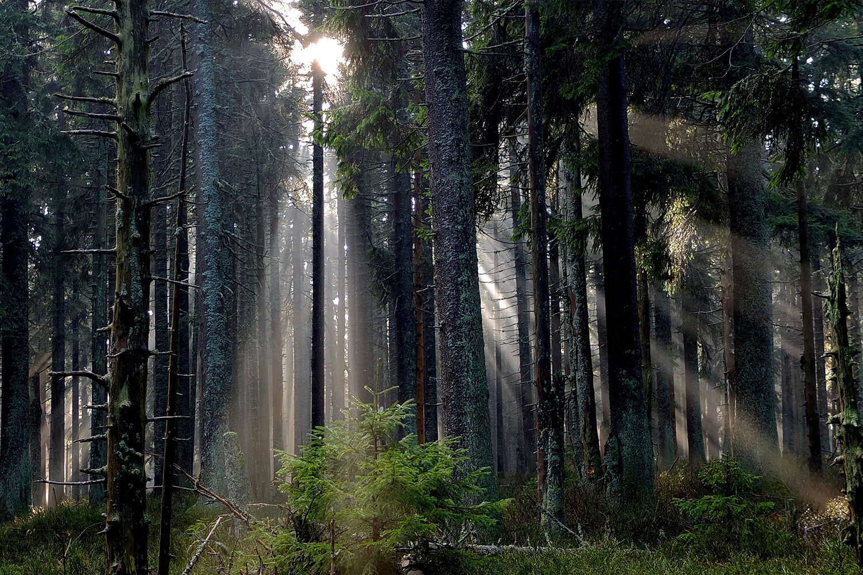 Umwelt - Kaufberatung Fenster: Holz oder Kunststoff?
